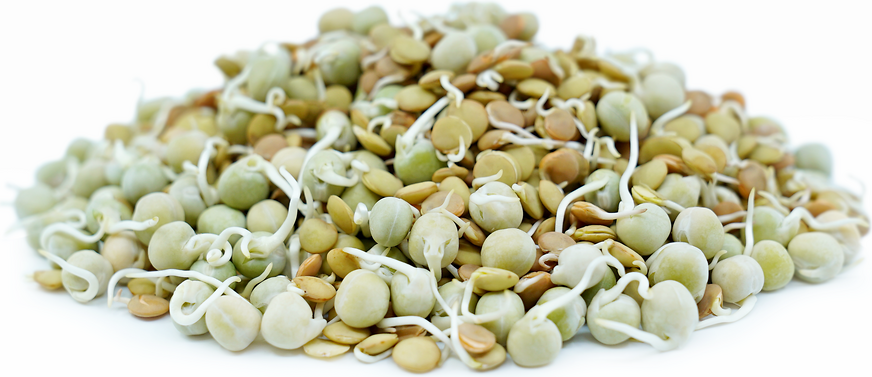 Mix Beans Sprouts picture