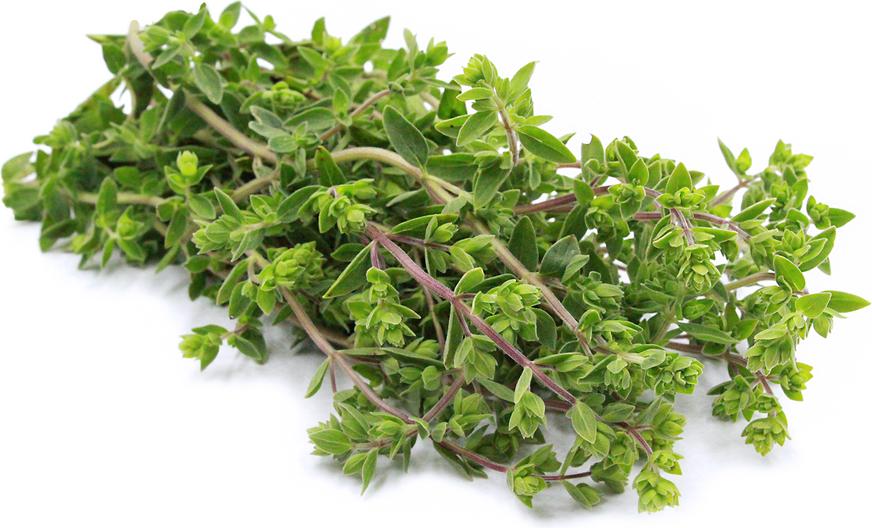 Image result for Marjoram herb