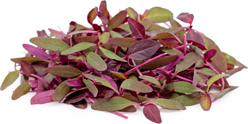 Micro Red Amaranth Information Recipes And Facts