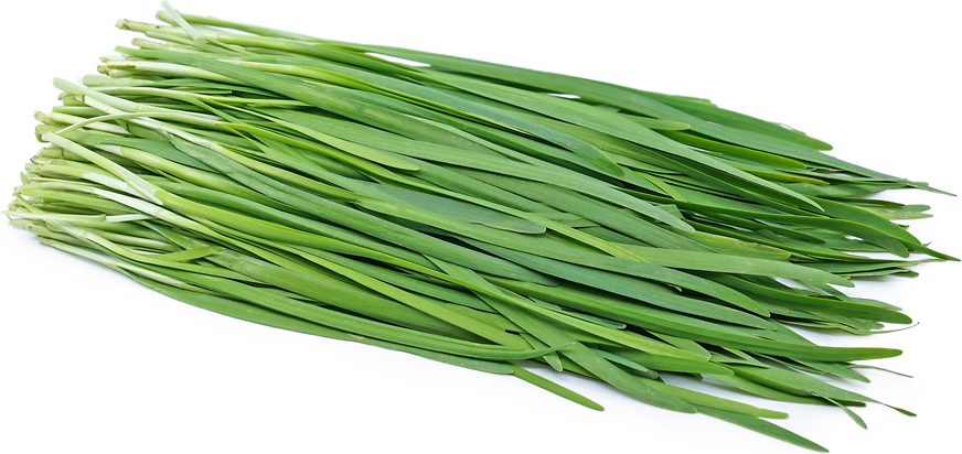 Garlic Chives Information, Recipes and Facts