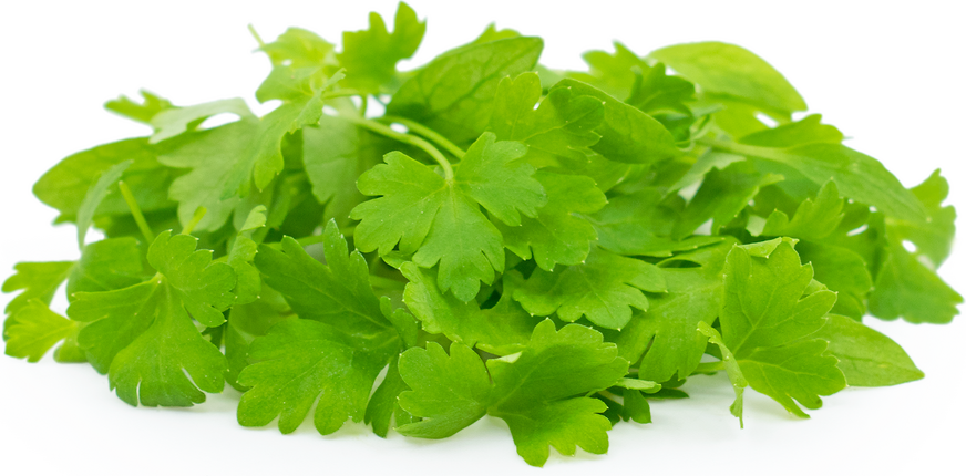 Micro Italian Parsley picture