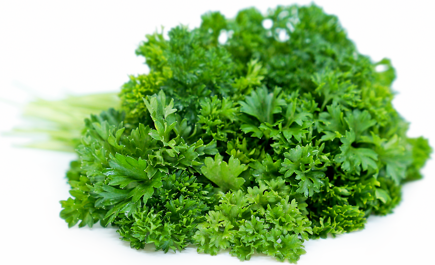 Parsley Information, Recipes and Facts