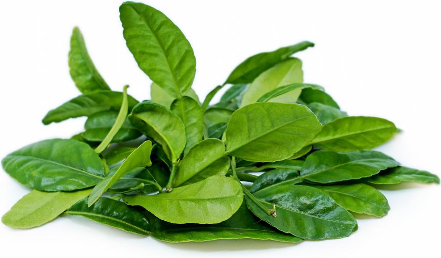 how to grow kaffir lime leaves