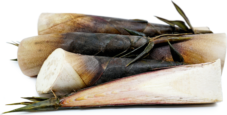 Fresh Bamboo Shoots picture