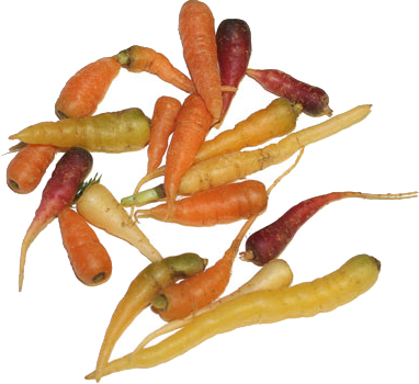Baby Micro Mix Carrots