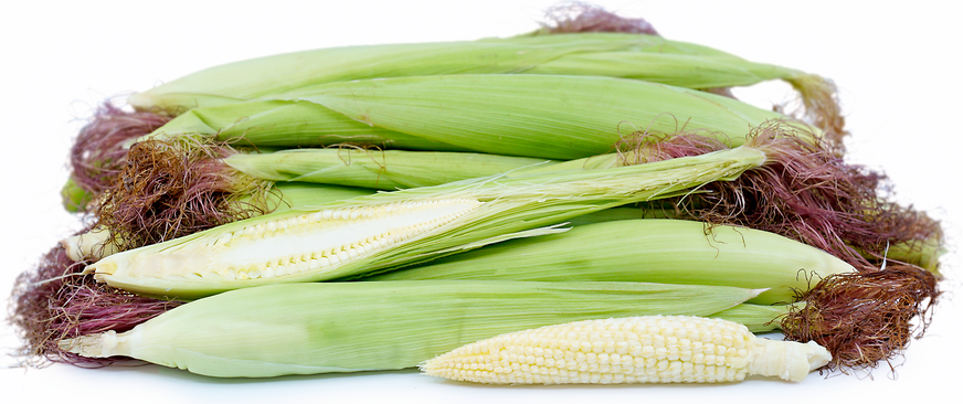 Baby Corn picture