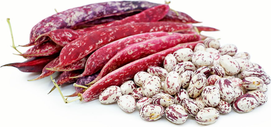 Cranberry Shelling Beans