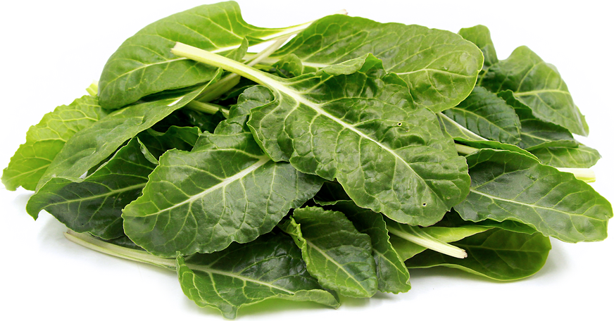 Baby Green Swiss Chard Information, Recipes and Facts