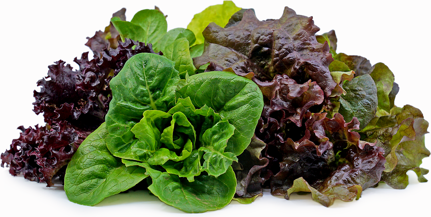 Assorted Lettuce picture