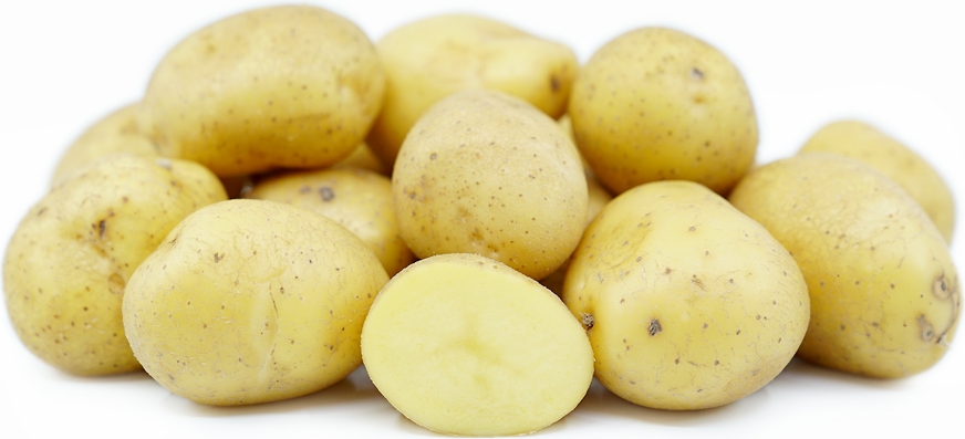 German Butterball Potatoes