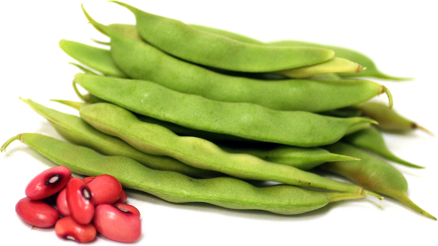 Hidatsa Red Shelling Beans picture