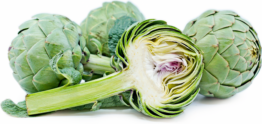 lyon artichokes information recipes and facts