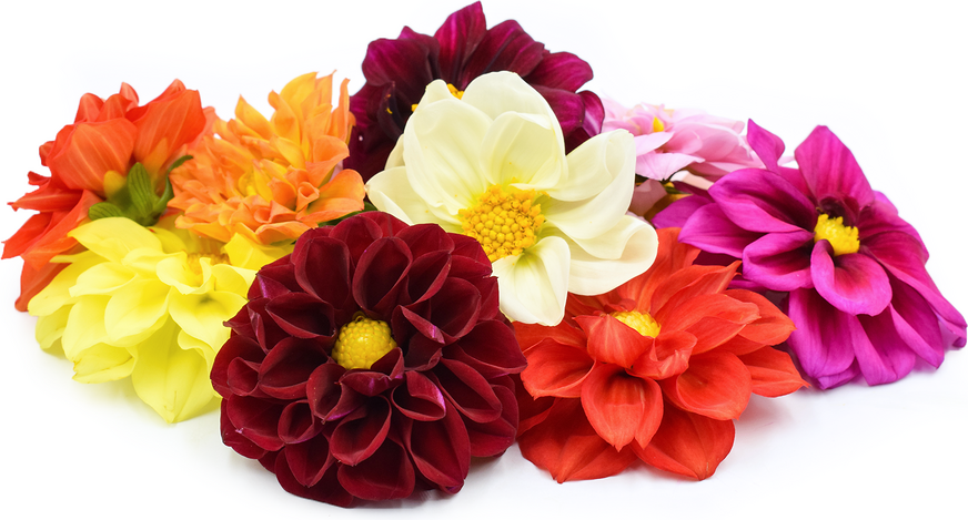 Dahlia Flowers picture