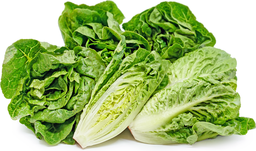 Sweet Artisan Green Gem Lettuce picture