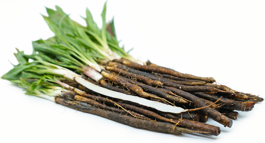 Salsify Root picture