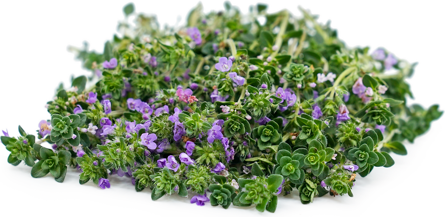 Flowering Thyme picture