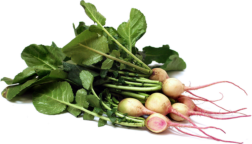 Watermelon Radishes picture