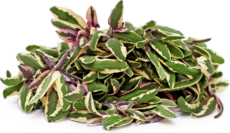 Variegated Sage picture