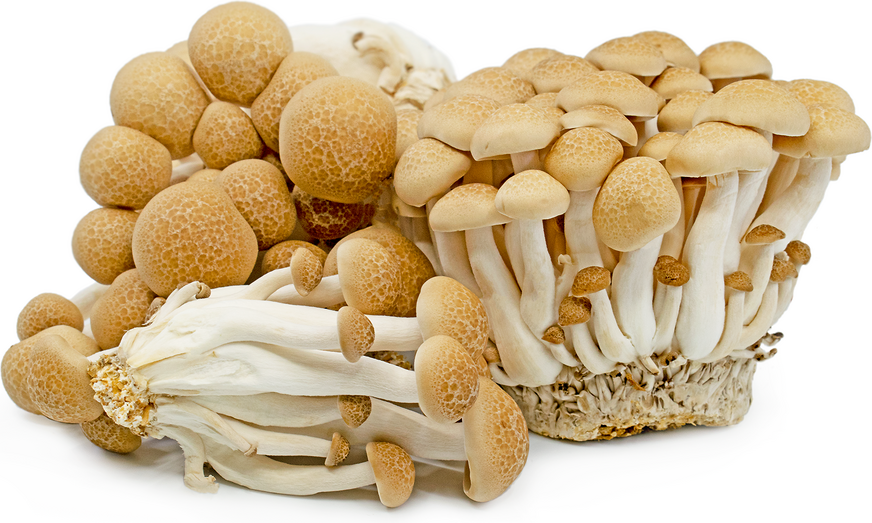 Brown Hon Shimeji Mushrooms picture