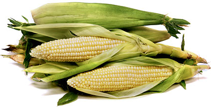 White Corn picture