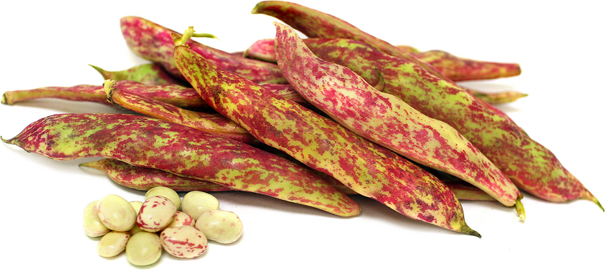 Tongue of Fire Shelling Beans picture