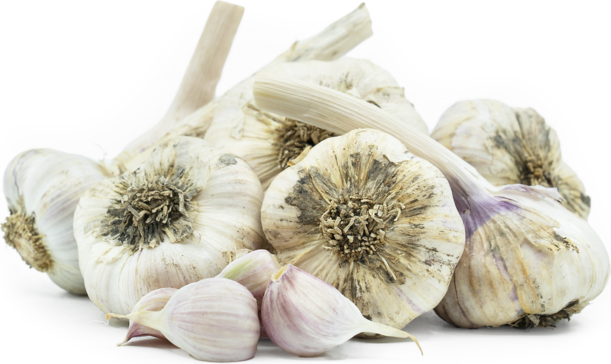 Inchelium Garlic picture