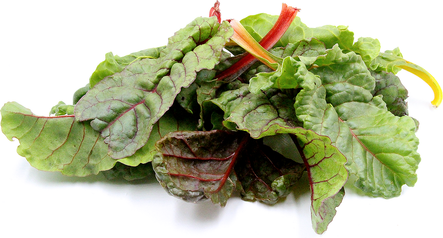 Rainbow Baby Swiss Chard picture