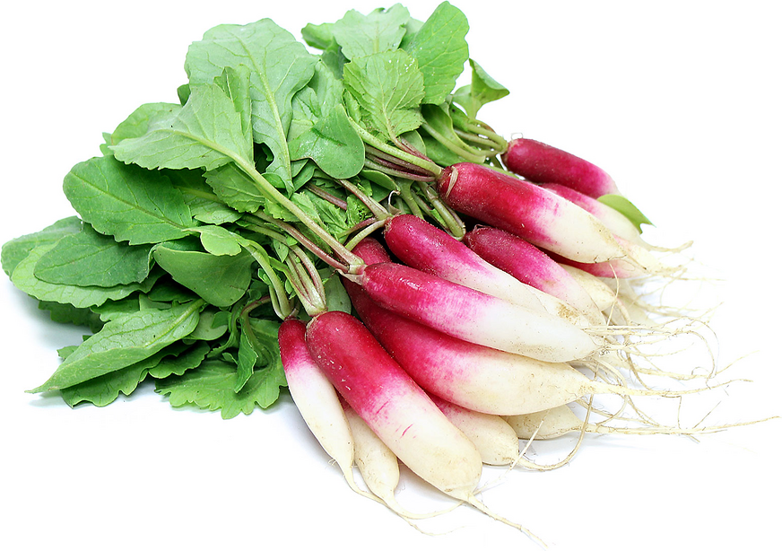 French Breakfast Radishes picture