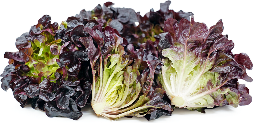 Red Oak Lettuce picture