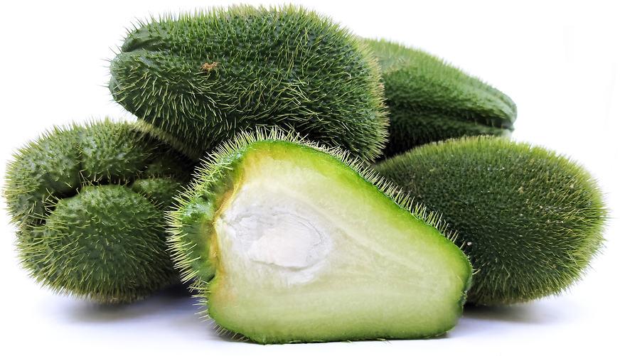 Prickly Chayote Squash picture