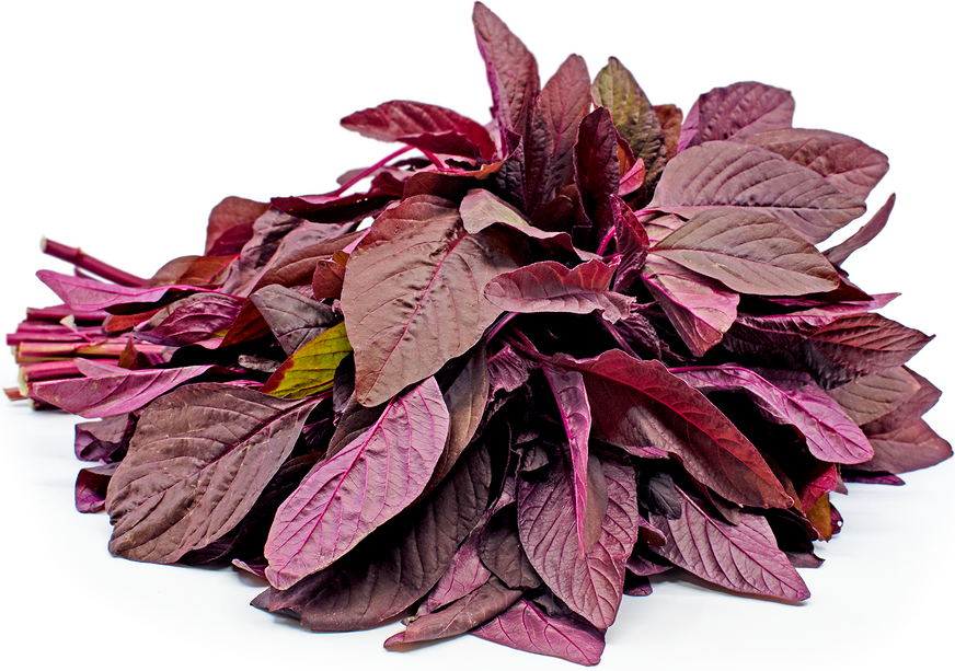 Red Amaranth picture