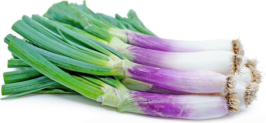 Torpedo Red Onions picture