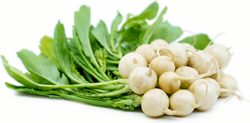 Baby White Turnips Information Recipes And Facts