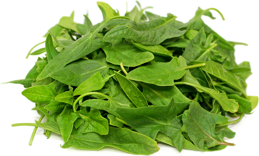 Green Okame Spinach picture