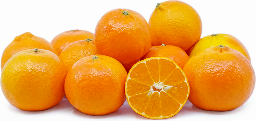 Lee Tangerines picture
