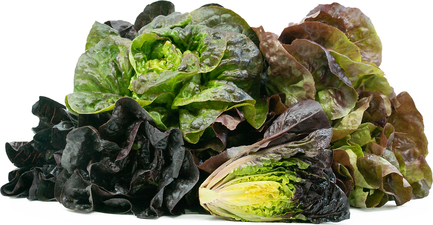 Red Gem Lettuce