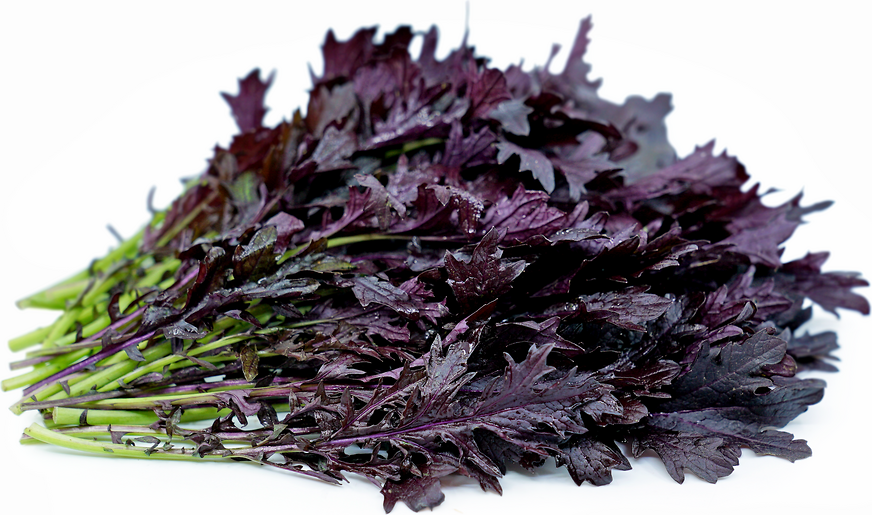Red Mizuna Lettuce Information, Recipes and Facts