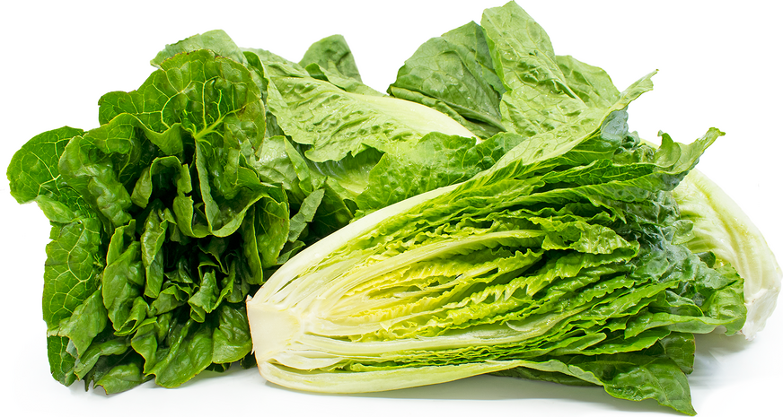 Romaine Lettuce picture