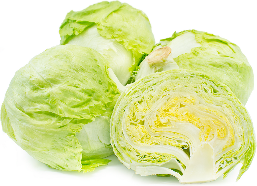 Iceberg Lettuce Information, Recipes and Facts