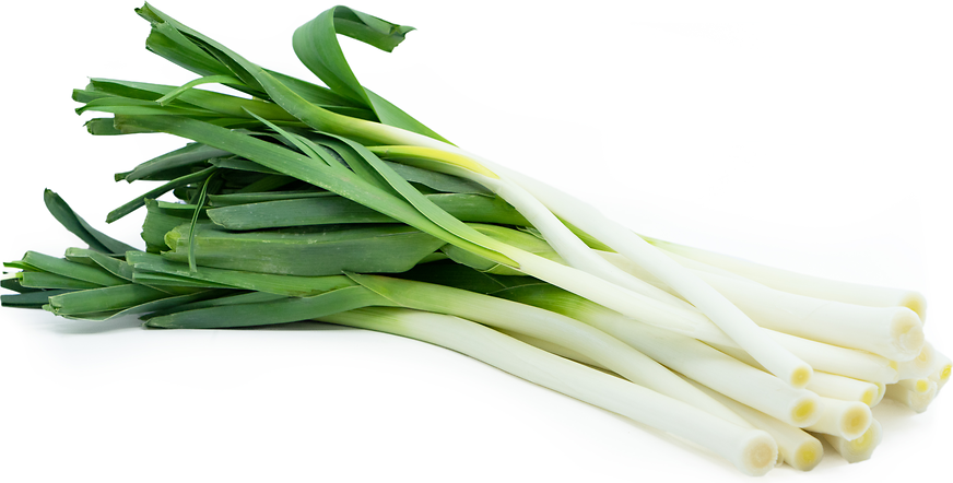French Leeks Information Recipes And Facts