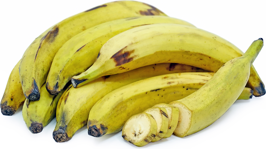 Yellow Plantain Bananas