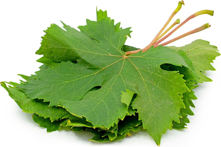 Grape Leaves picture