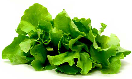 butter lettuce information recipes and facts