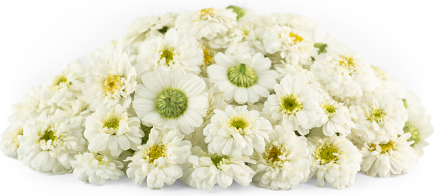 White Mum MicroFlowers™