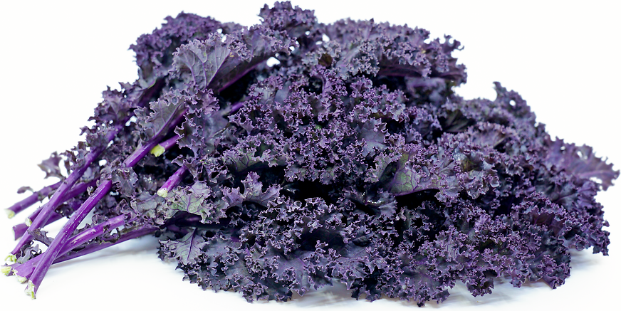 Redbor Kale Information Recipes And Facts