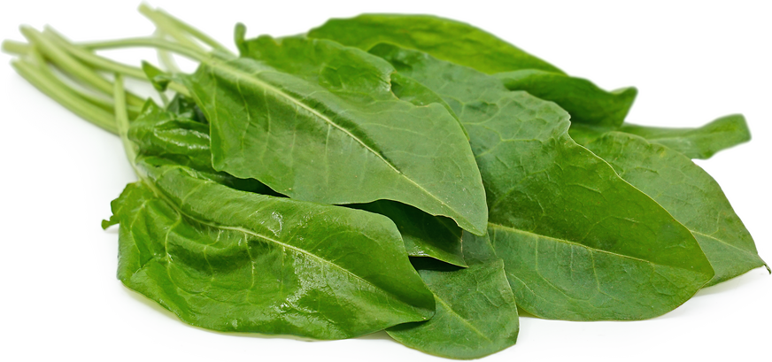 French Sorrel picture