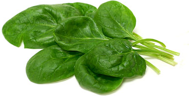 Giant Noble Spinach