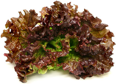 Vulcan Lettuce picture