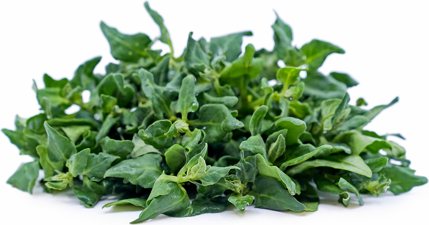 New Zealand Spinach picture