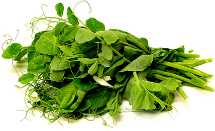 Pea Tendrils picture